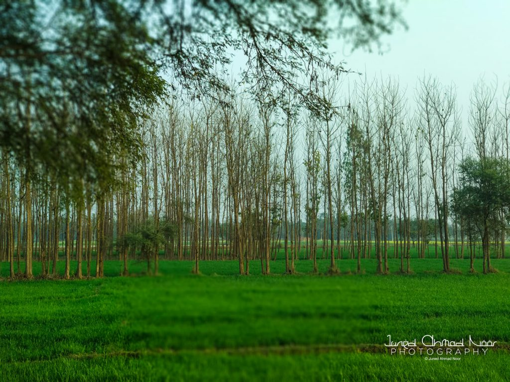 behraich countryside