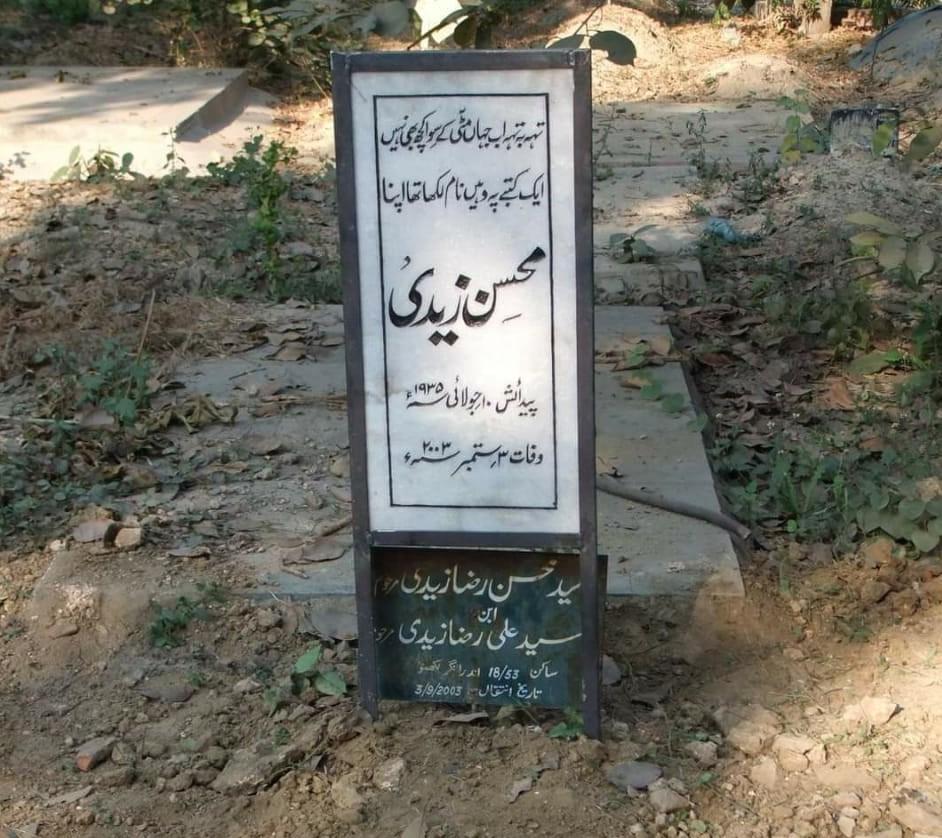 محسن زیدی ایک نظر